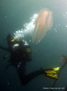 Great Cape Town Diving