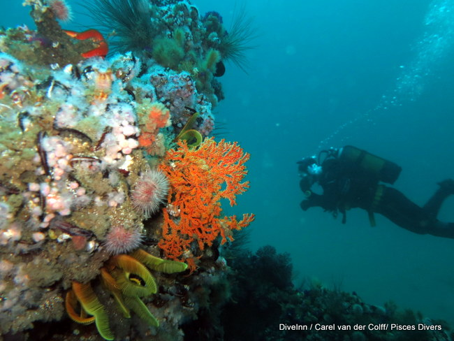 Dive Inn Cape Town – Great dives in Cape Town