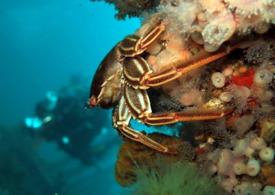 Crab and Diver