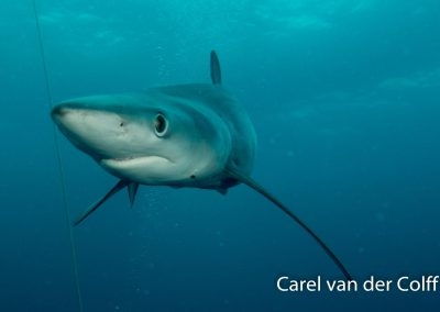 ReActivate Dive Inn Cape Town
