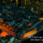 Aliwal Shoal Dive Trip July 2015