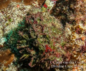 Aliwal Shoal Dive Trip July 2015