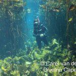 Diving through lilies