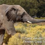 Aquila Private Game reserve elephant