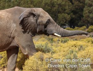 Aquila Private Game reserve elephant
