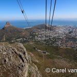Dive Inn Cape Town Peak Season