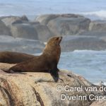 Dive Inn Cape Town Peak Season